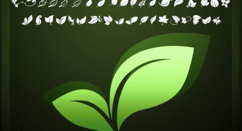 fotograami0-leaves04